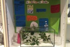 Terrarium und Plakat zum Thema Insekten im Forum des Schulzentrums